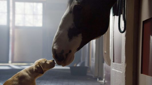 Budweiser becomes latest Super Bowl commercial stalwart to sit out this year's broadcast