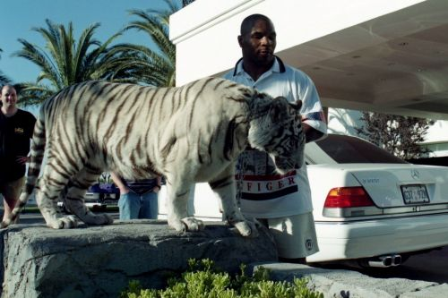 Mike Tyson explains how he came to own his infamous tigers