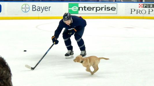 St. Louis Blues' team puppy gets his turn with the Stanley Cup